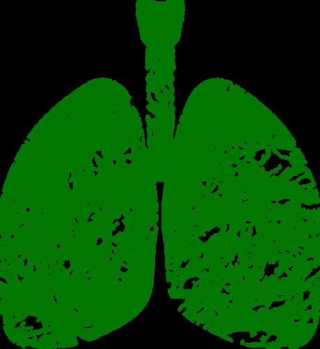 Keuhkoputken Kutina